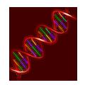 genetique